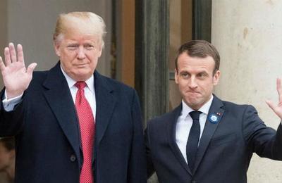 El árbol que plantaron Trump y Macron en la Casa Blanca se murió