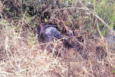 Hallan cadáver de un sexagenario en Minga