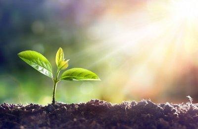 Las especies de plantas se extinguen a gran velocidad