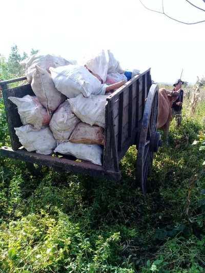 Productores logran comercializan 50.000 kilos de mandioca en San Juan Nepomuceno