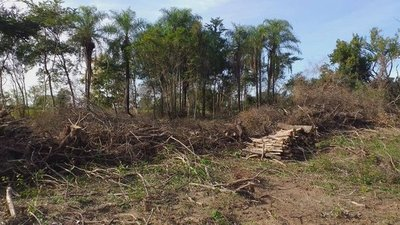 Intervienen inmobiliaria por eliminación de gran cantidad de árboles nativos