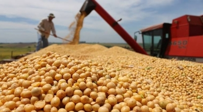 HOY / Productores visualizan leve mejoría de la soja