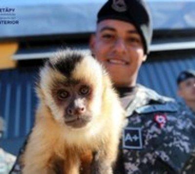 Grupo Lince obtuvo permiso para tener a un mono como mascota