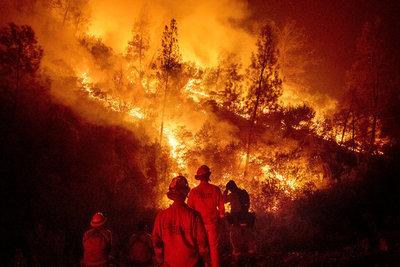Intentó eliminar un nido de avispas y provocó un enorme incendio forestal
