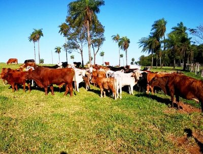 Ola de abigeato mantiene en zozobra a productores