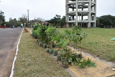Ayolas: Conmemorarán Día del Árbol reforestando