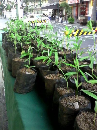 Día del árbol: Yacyretá regala plantines en la plaza de la Democracia