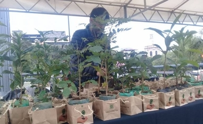 HOY / Regalan plantines de especies nativas para celebrar Día del Árbol