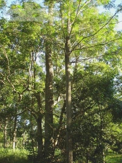 El árbol, un aliado de la naturaleza