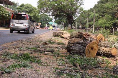 Tres años de cárcel por cortar árboles
