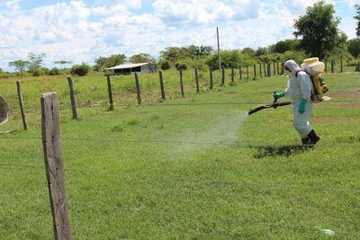 Senave emite declaración de alerta por langostas en el Chaco