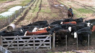 Los bajos precios del ganado en Brasil y Argentina han afectado a Paraguay