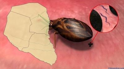 Más 3.000 niños chaqueños beneficiados con proyecto contra Chagas