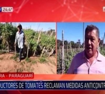 Productores de tomate de Paraguarí exigen medidas anticontrabando