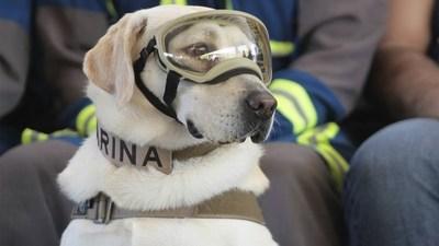 Se jubiló Frida, la famosa perrita que rescató a más de 50 personas