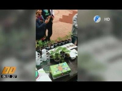 Aceite de marihuana made in Paraguay