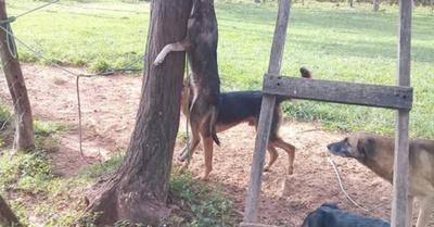 Mató y colgó a perro ¡por un yvyramata!