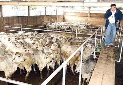 Aumentó la oferta de ganado gordo y el precio ajusto a la baja