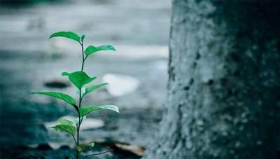 Elegí Verde: este año la meta es alcanzar 170.000 árboles plantados