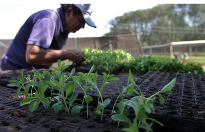 Crédito Agrícola reporta dinámica crediticia positiva en el sector productivo