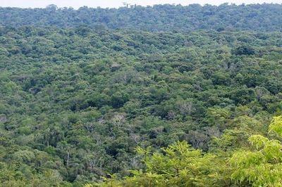 Lanzan un manual de restauración de bosques protectores de cauces hídricos