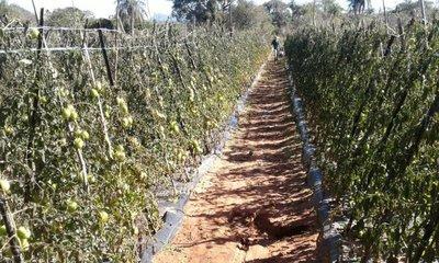MAG insta a tomar acciones para evitar daño de heladas a cultivos