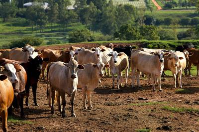 Unos 15 millones de dólares serán destinados a pequeños y medianos ganaderos para mejorar la productividad