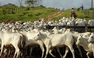 HOY / Brasil y Paraguay unidos por   el espanto ante las plagas que  azotan la ganadería y la soja