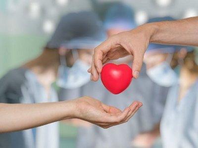 Tasa de donantes aumentó con la modificación de la Ley de Trasplante