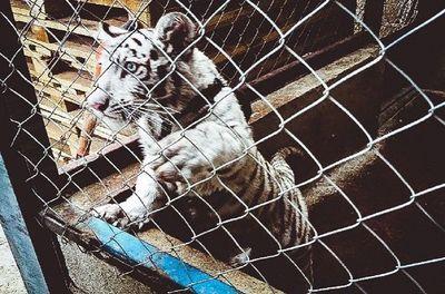 Miles de animales salvajes incautados en un operativo internacional