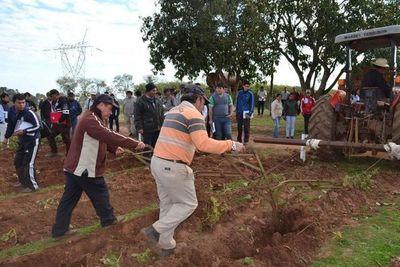 Promueven el cultivo de papa en Misiones