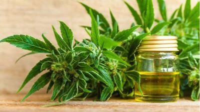 Francia aprueba la experimentación con cannabis terapéutico
