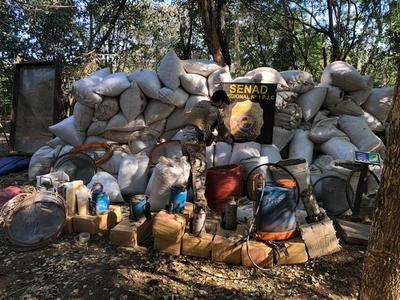 Senad desmanteló campamentos con 12 toneladas de marihuana en Amambay