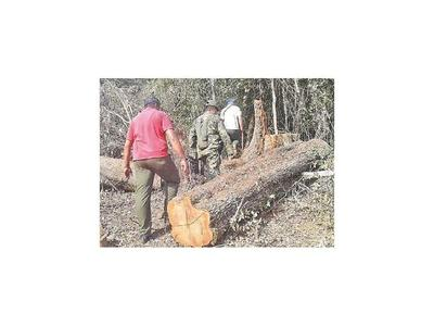 Detectan tala de árboles en Parque  San Rafael