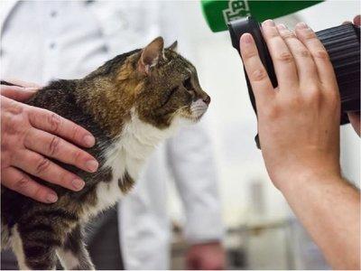 Implantan injerto idéntico a un hueso a gato con cáncer de huesos