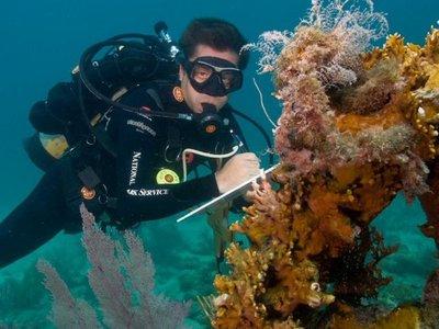 Grave enfermedad de corales une a EEUU en rescate de este animal