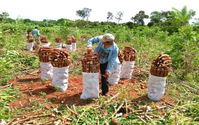 Piden mejor precio por kilo de mandioca y amenazan con cierre del cruce Itakyry