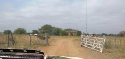 Investigarán responsabilidad de Senacsa en robo de animales de estancia Taguató