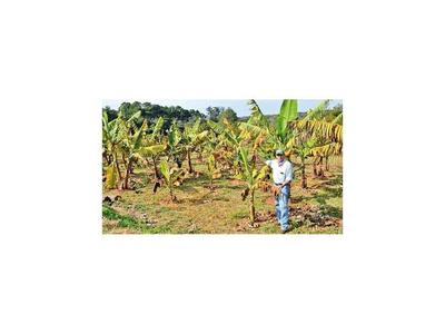 Heladas dañaron frutales en Cordillera