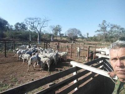 Recuperan otro lote de ganado robado en cuádruple homicidio