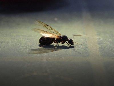 Invasión de hormigas voladoras es detectada en el espacio