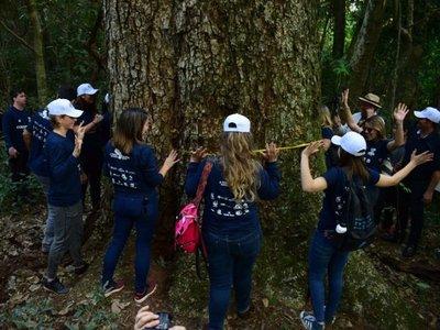 Midieron a los árboles finalistas del concurso Colosos de la Tierra