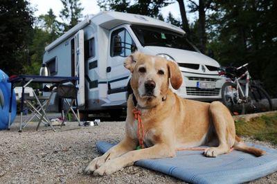 ¿Qué hay que llevar para ir de camping con un perro?