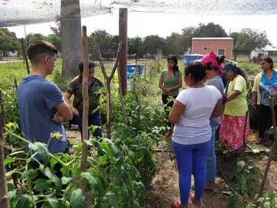 Nativos cosechan producción hortícola