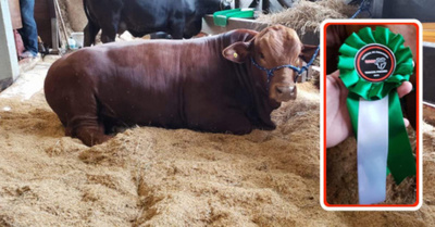 """Recuperdí"": perdió dinero, pero ojediverti con su toro"
