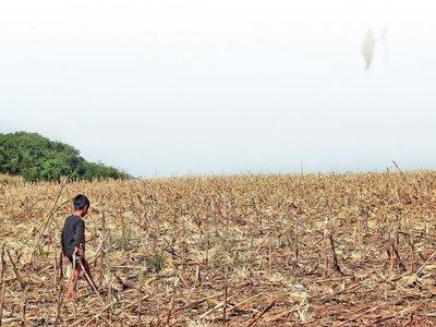La franja de bosques de  Itaipú es utilizada para  negocios ilícitos
