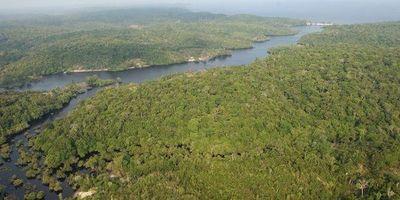 Supervisor de deforestación en Brasil anuncia su destitución tras polémica con Bolsonaro
