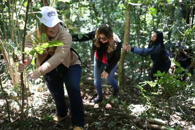 """""""Colosos de la Tierra"""" llegó a Itapúa buscando a los árboles más grandes"""