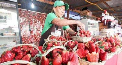 Expo frutilla en Areguá durante todo agosto