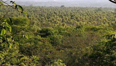 Darán taller sobre servicios ambientales para comunidades indígenas del Chaco